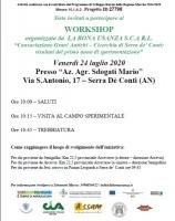 Consociazione Grani Antichi – Cicerchia di Serra de' Conti: risultati del primo anno di sperimentazione
